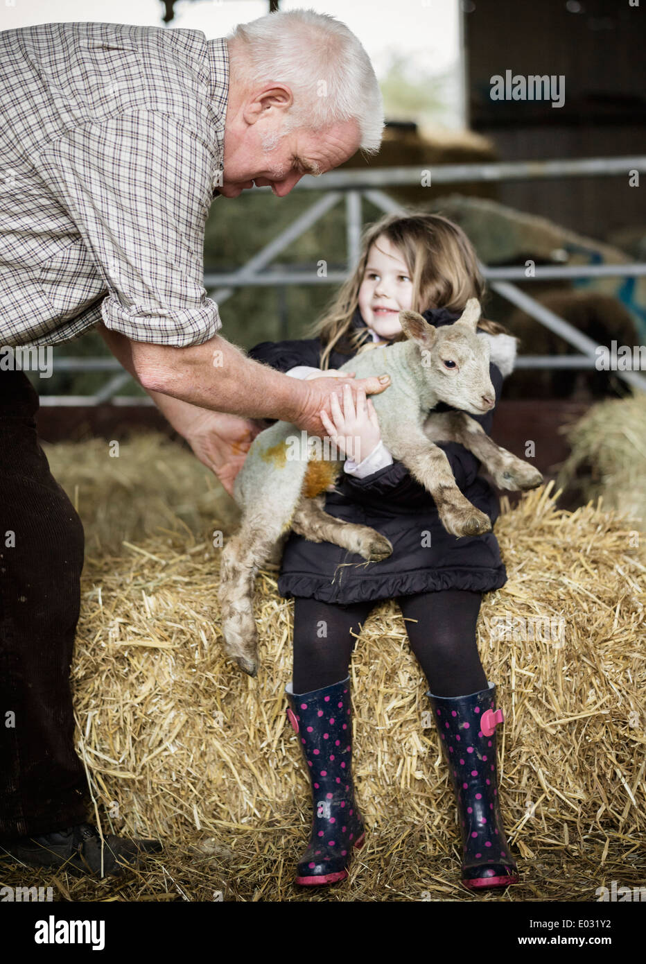 A girl holding a small new-born lamb. - Stock Image