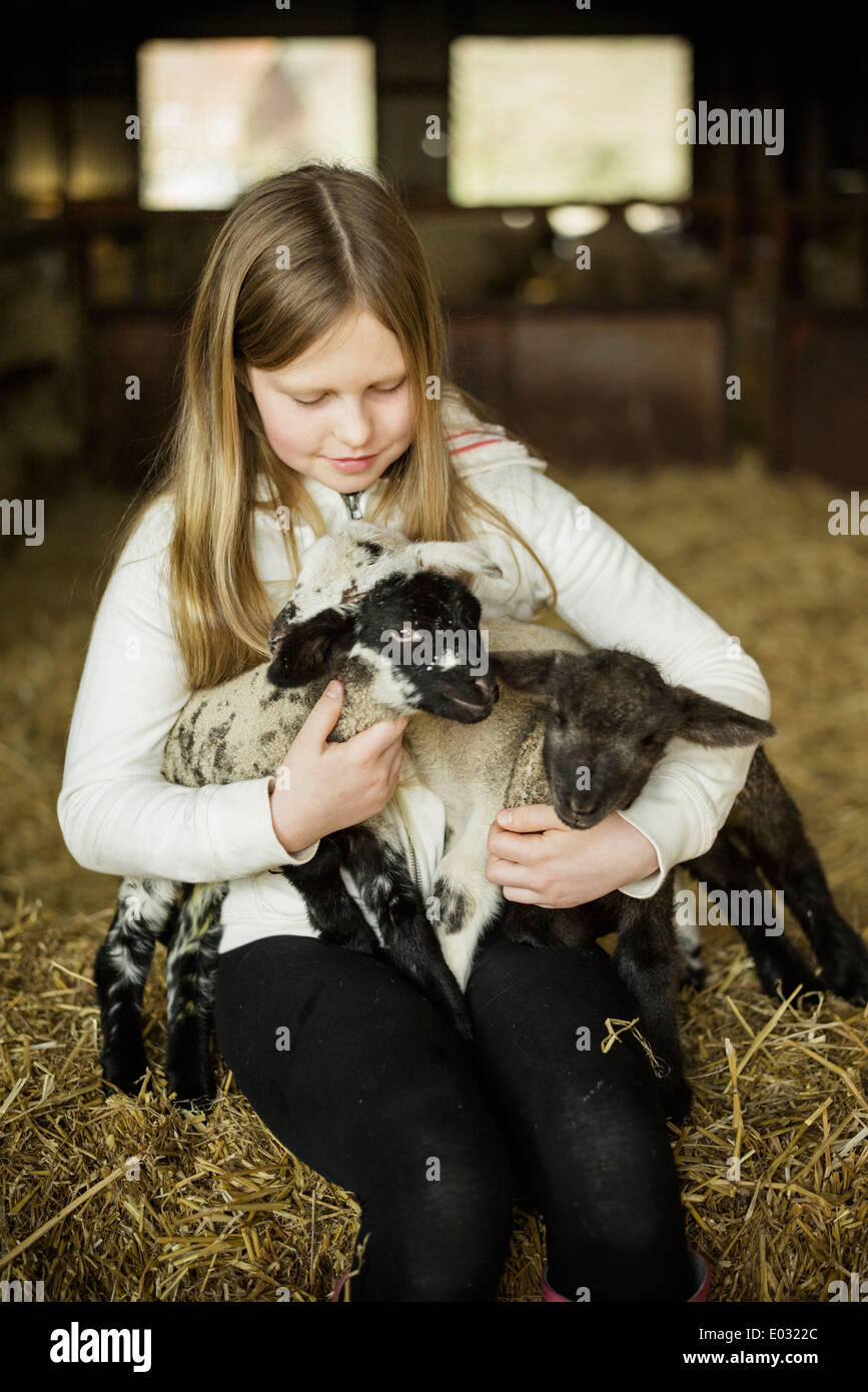 A girl holding two small lambs. - Stock Image