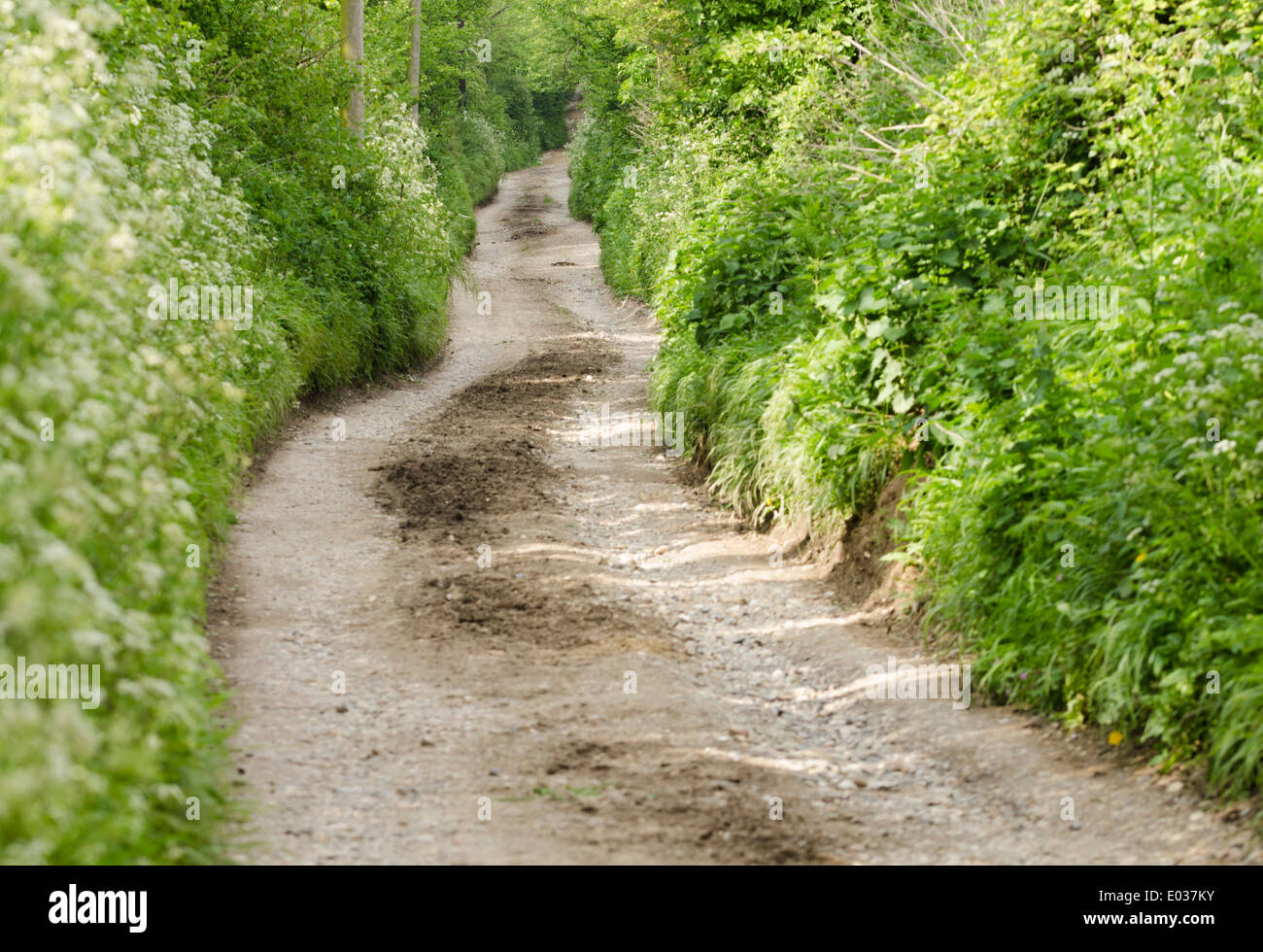 Narrow country lane with greenery either side. - Stock Image