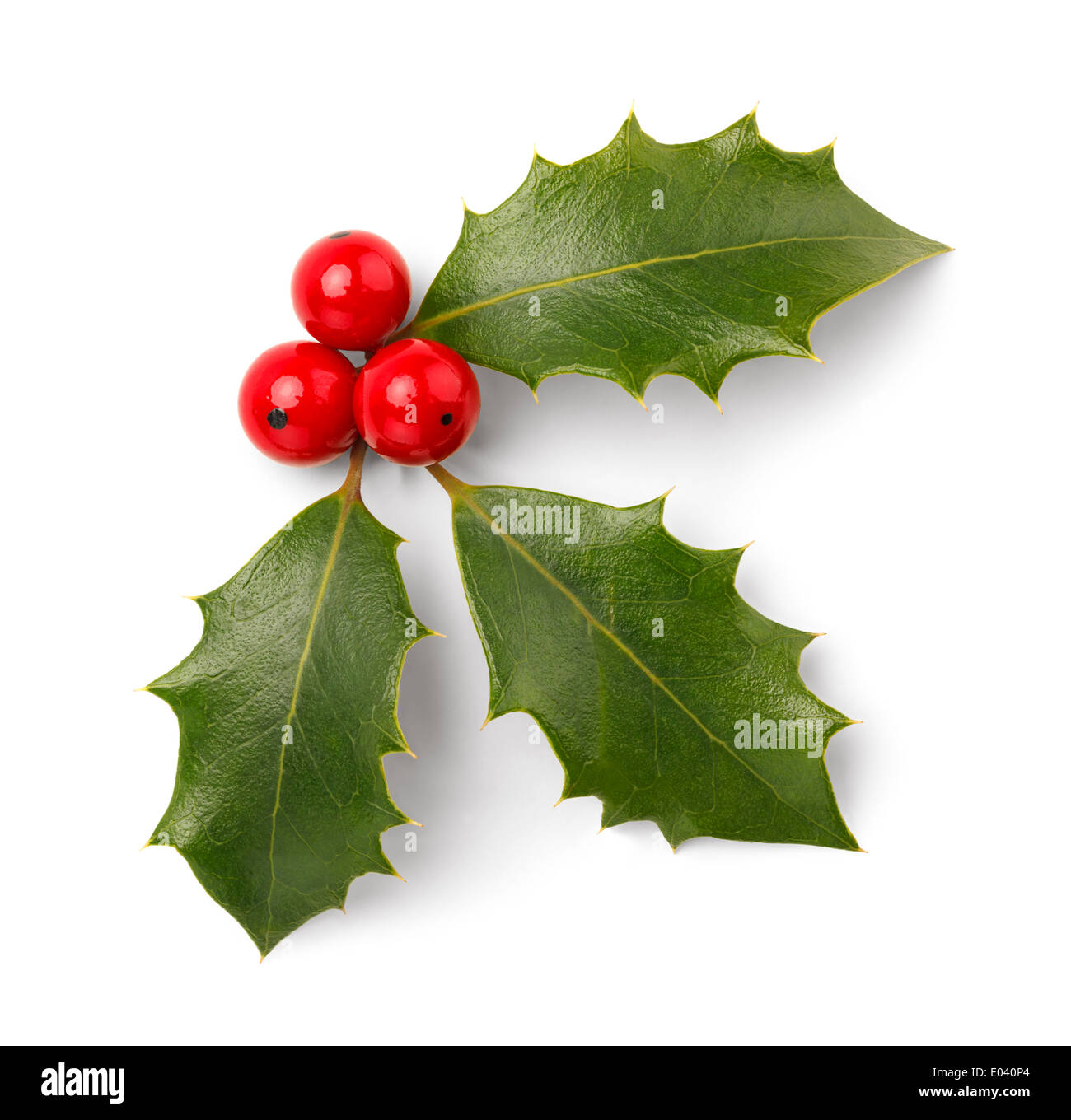 Holly Leaves and Red Berries Isolated on White Background. - Stock Image