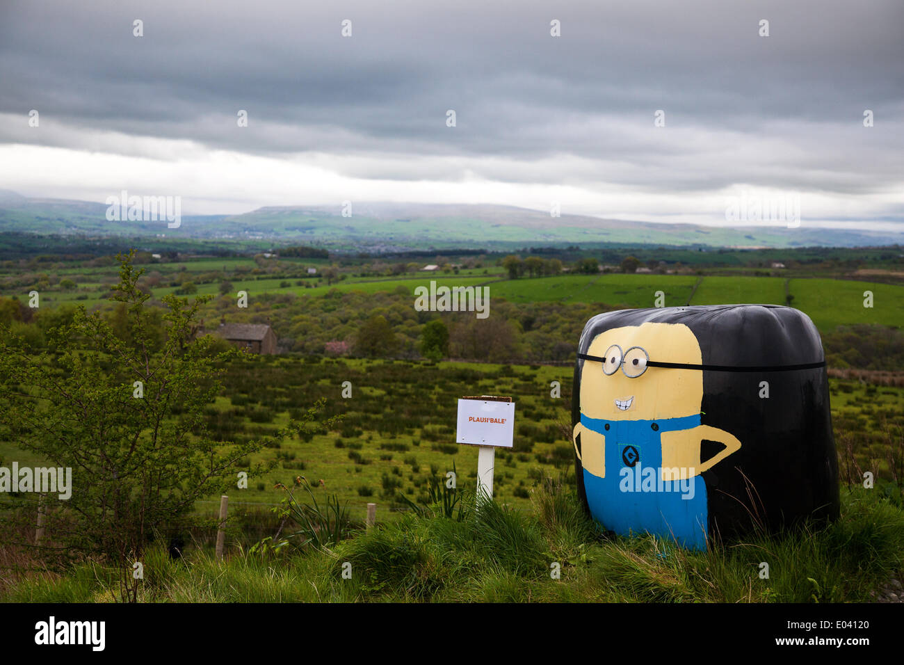 Wray, Lancaster, 1st May 2014.  'Despicable Me' dry hay bales wrapped in black plastic, with a sign 'Plaus 'able' Stock Photo