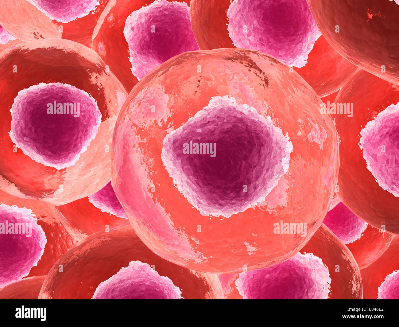 Microscopic view of animal cell. - Stock Image