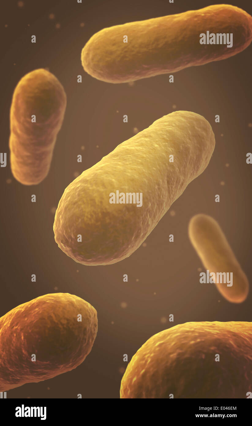 Microscopic view of bacteria. - Stock Image