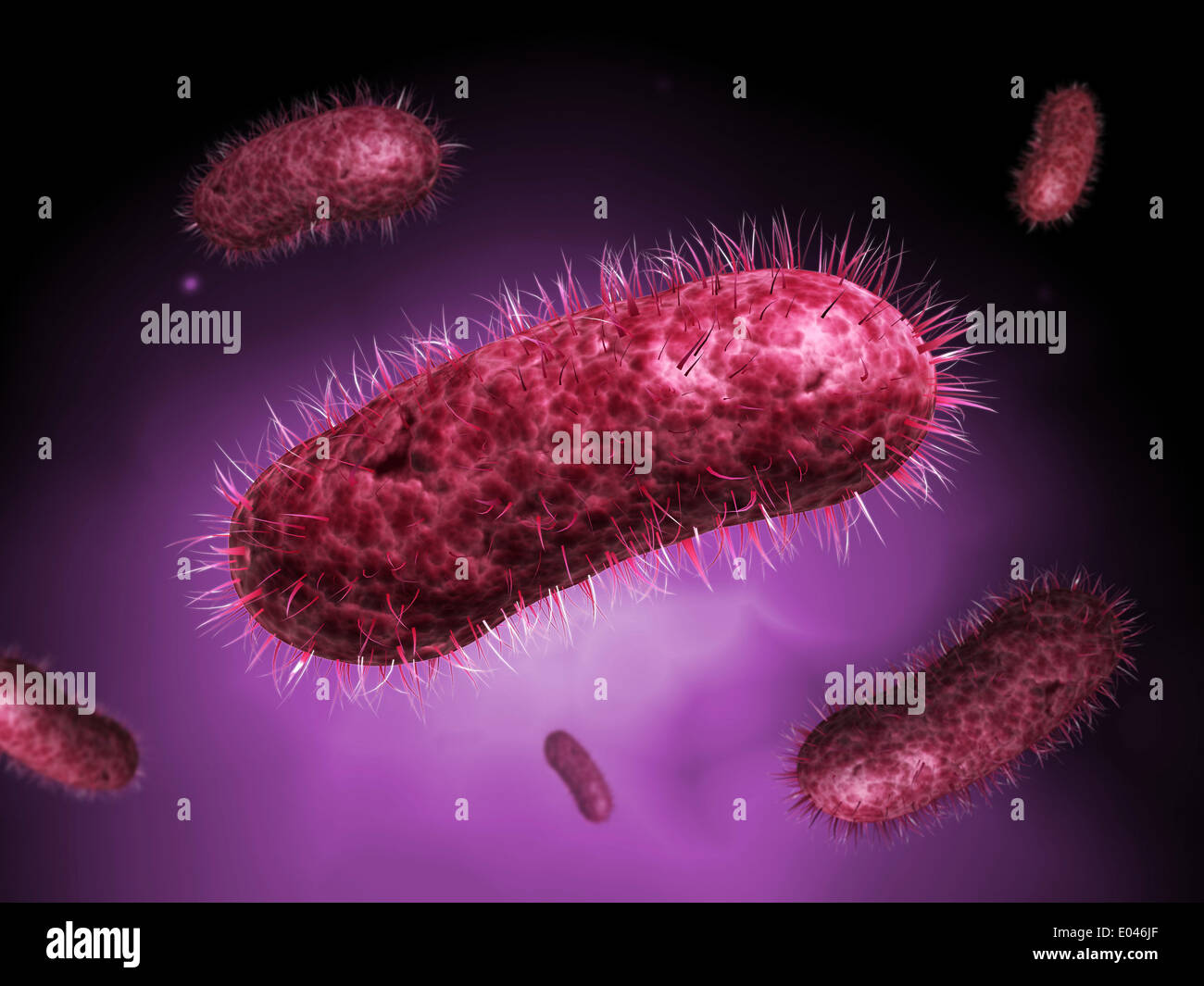 Microscopic view of bacteria. - Stock Image