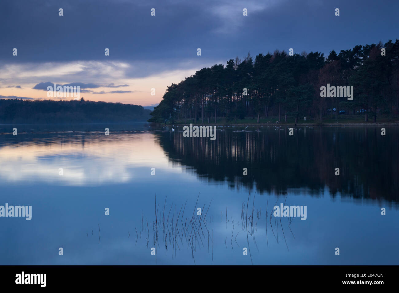 Beautiful scenic evening sunset over still, calm water & woodland banks of rural, deserted Swinsty Reservoir, Washburn Valley, North Yorkshire, GB. - Stock Image
