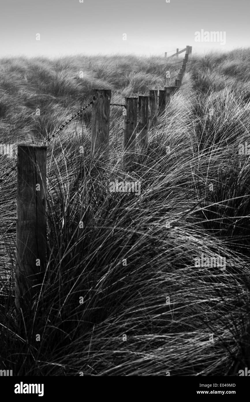 Wooden stakes and barbed wire in a sand dune, England, UK Stock ...