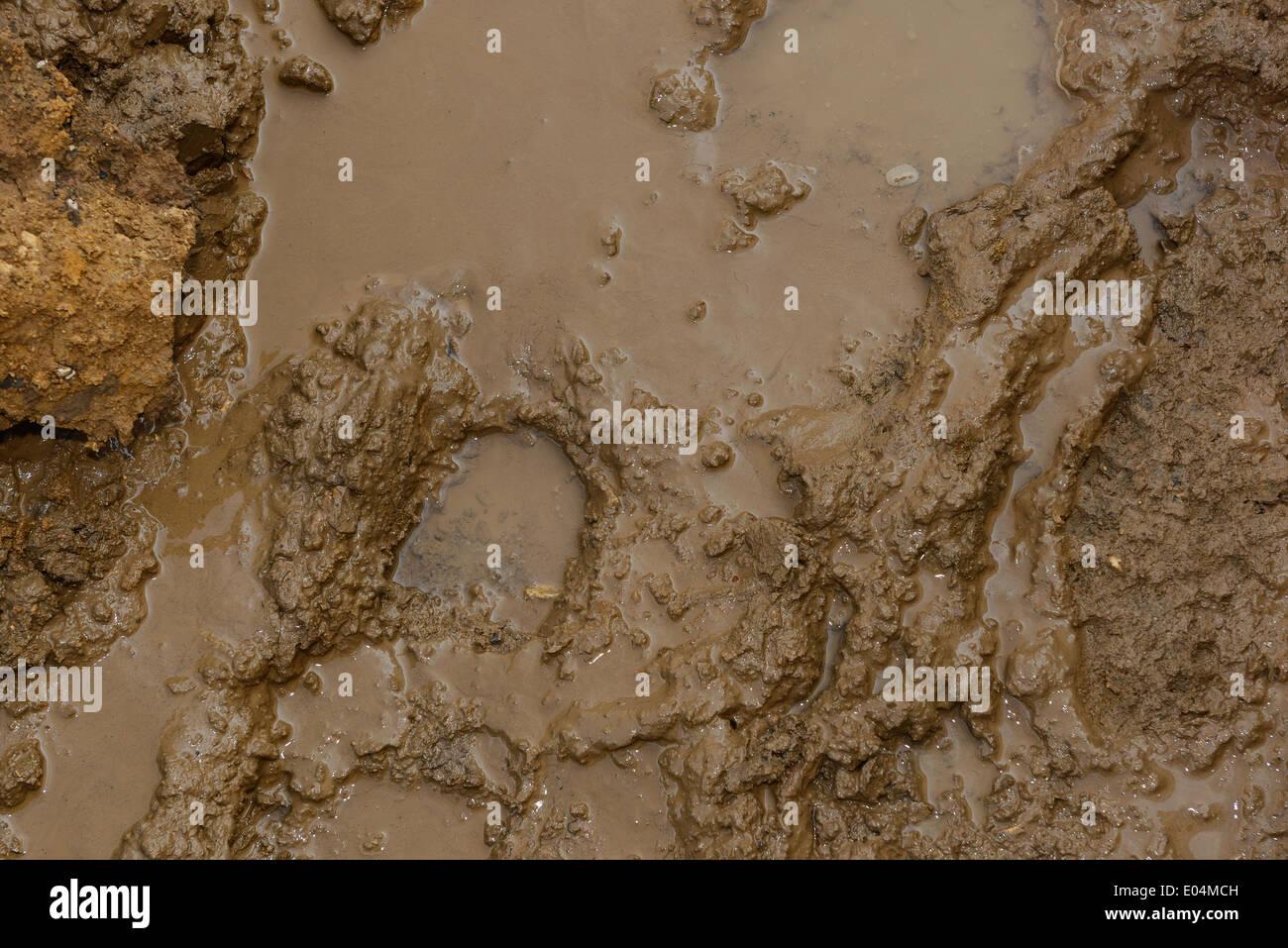 Footprint in mud - Stock Image