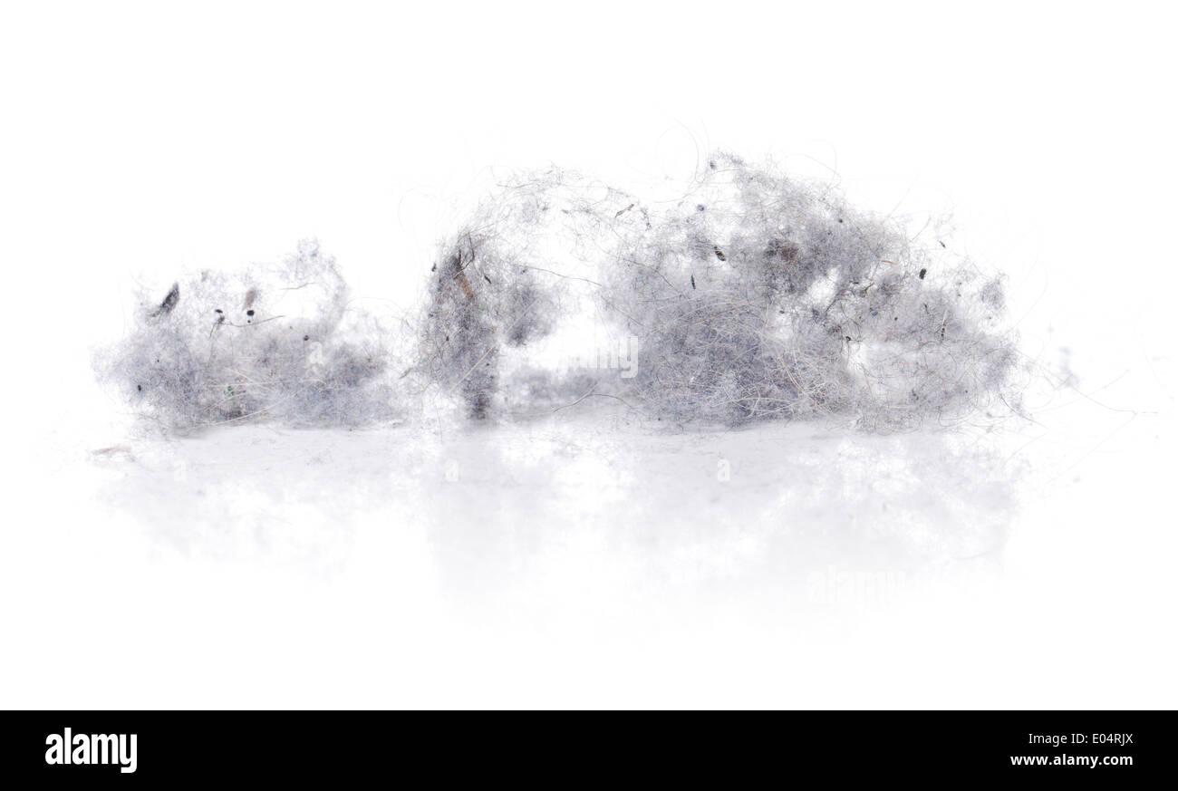 Dust bunnies on white reflecting background. - Stock Image