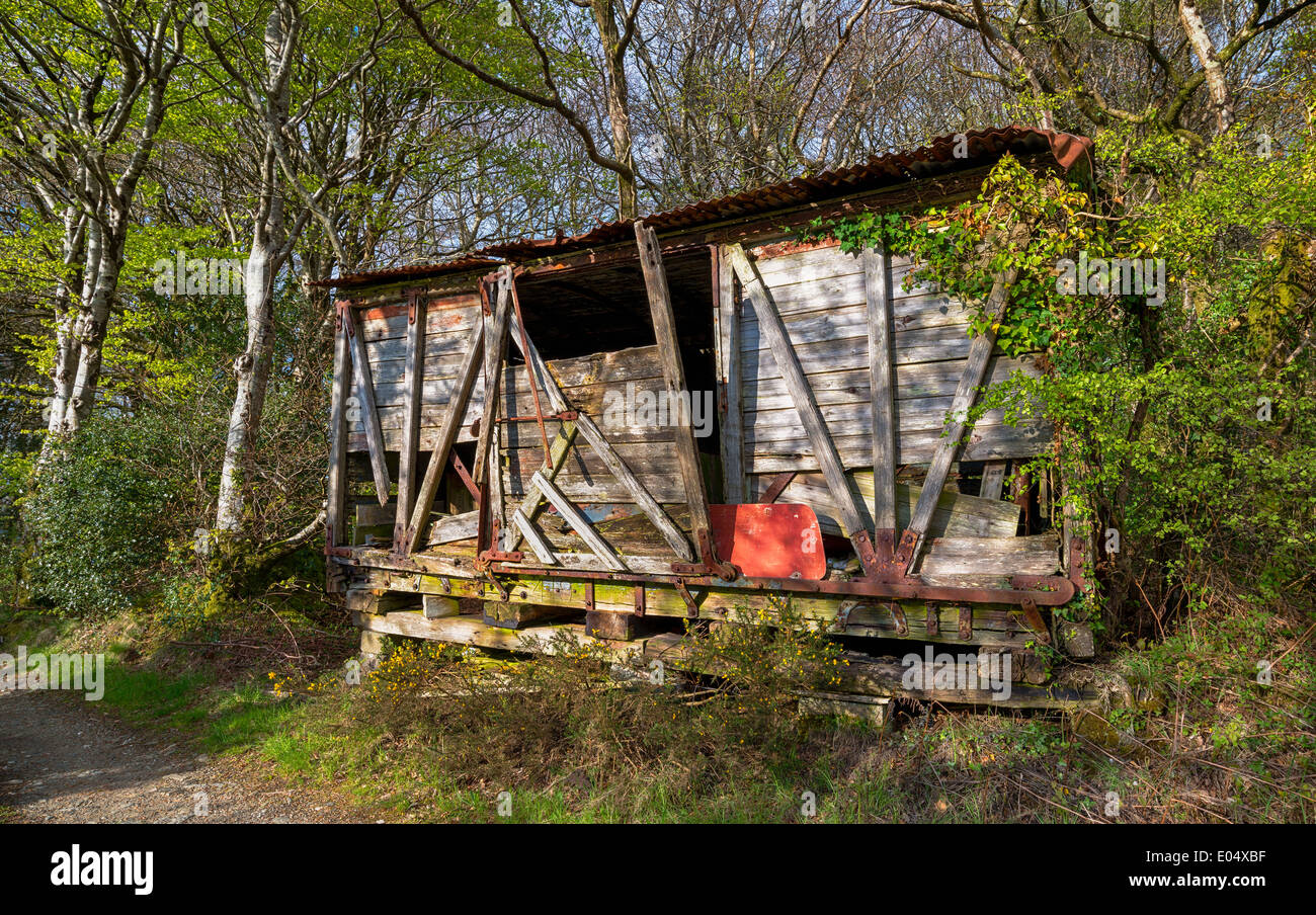 A rickety derelict wooden shack in the woods - Stock Image