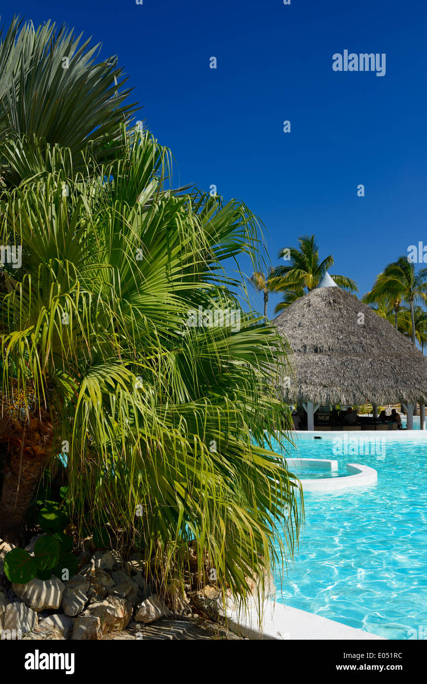 Fan palm by the pool and bar at vacation resort in Varadero Cuba with clear blue sky - Stock Image