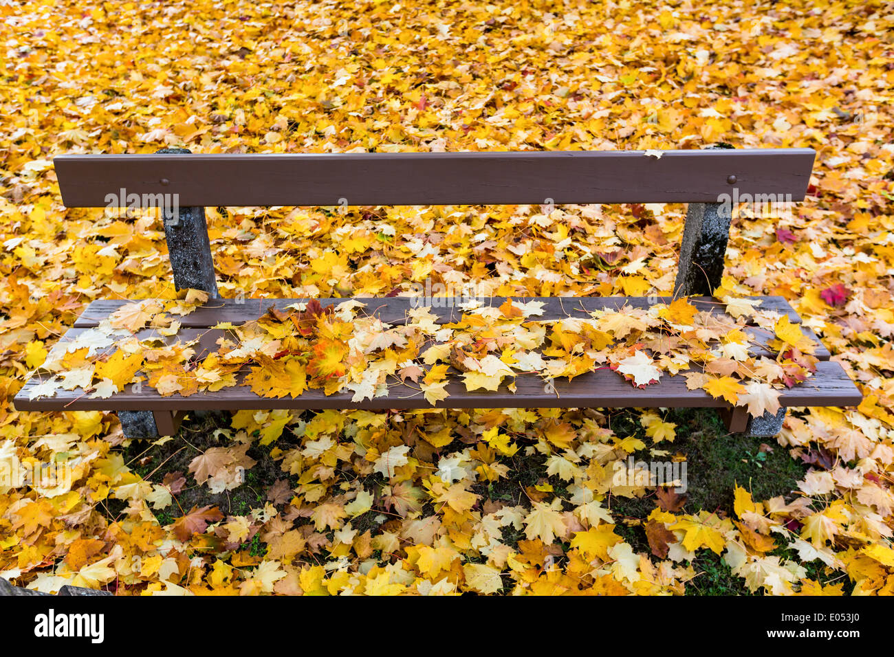 Yellow sheets in autumn have dropped from the trees Stock Photo