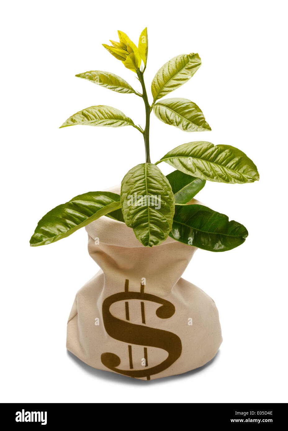 Tree growing out of money bank bag isolated on white. - Stock Image