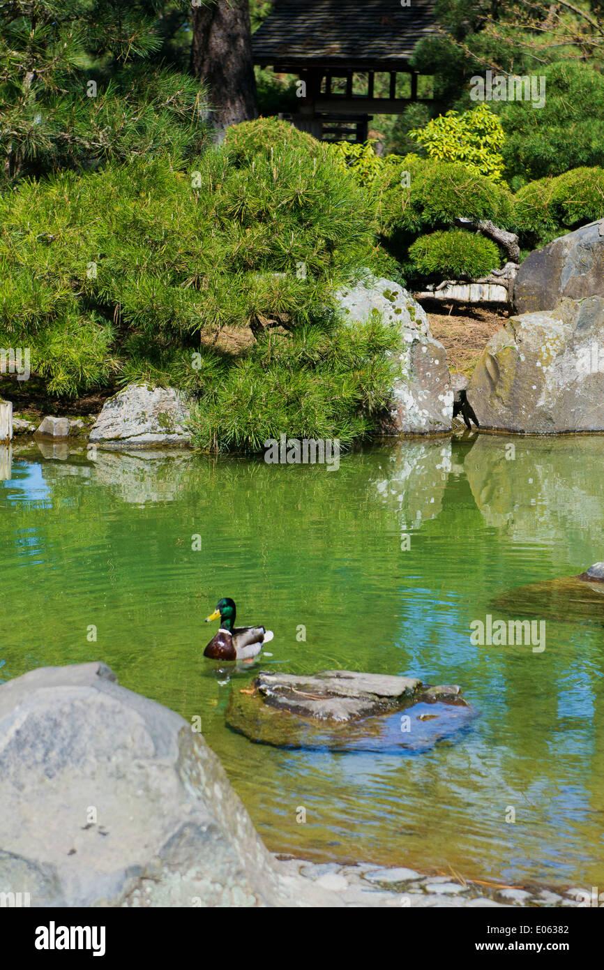 Buddha Pond Stock Photos & Buddha Pond Stock Images
