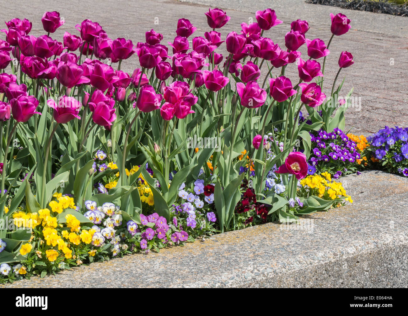 Spring flowers in new westminster park british columbia canada spring flowers in new westminster park british columbia canada mightylinksfo