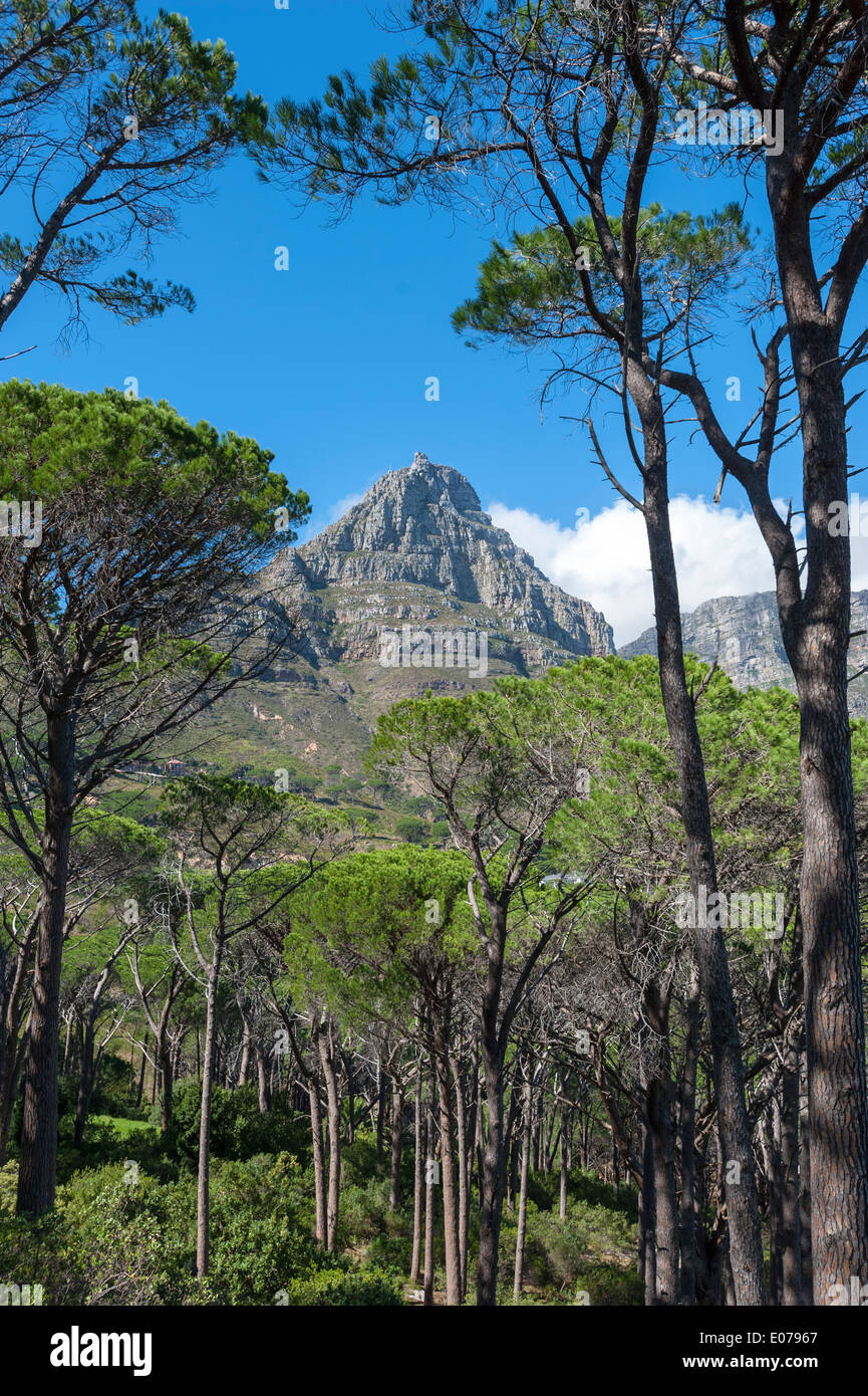 Upper station of cableway on Table Mountain, view from the forest below, Cape Town, South Africa - Stock Image