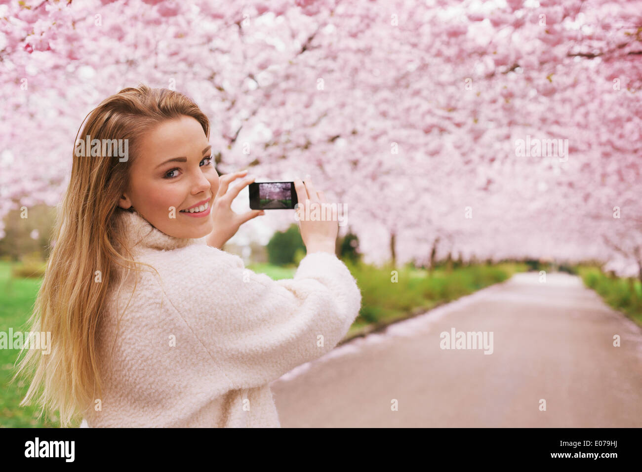 Young woman using her smartphone to capture images of the path and cherry blossoms tree at park, Young female looking at camera. - Stock Image