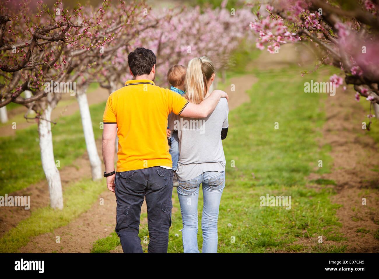 Parents with toddler boy walking next to cherry trees, Austria - Stock Image