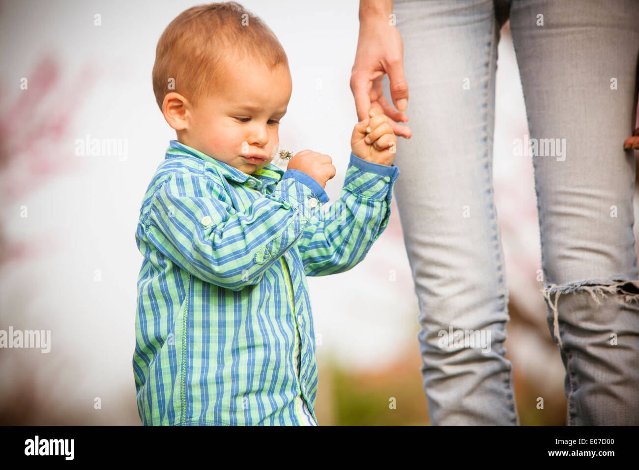 Mother and toddler boy holding hands, Austria - Stock Image