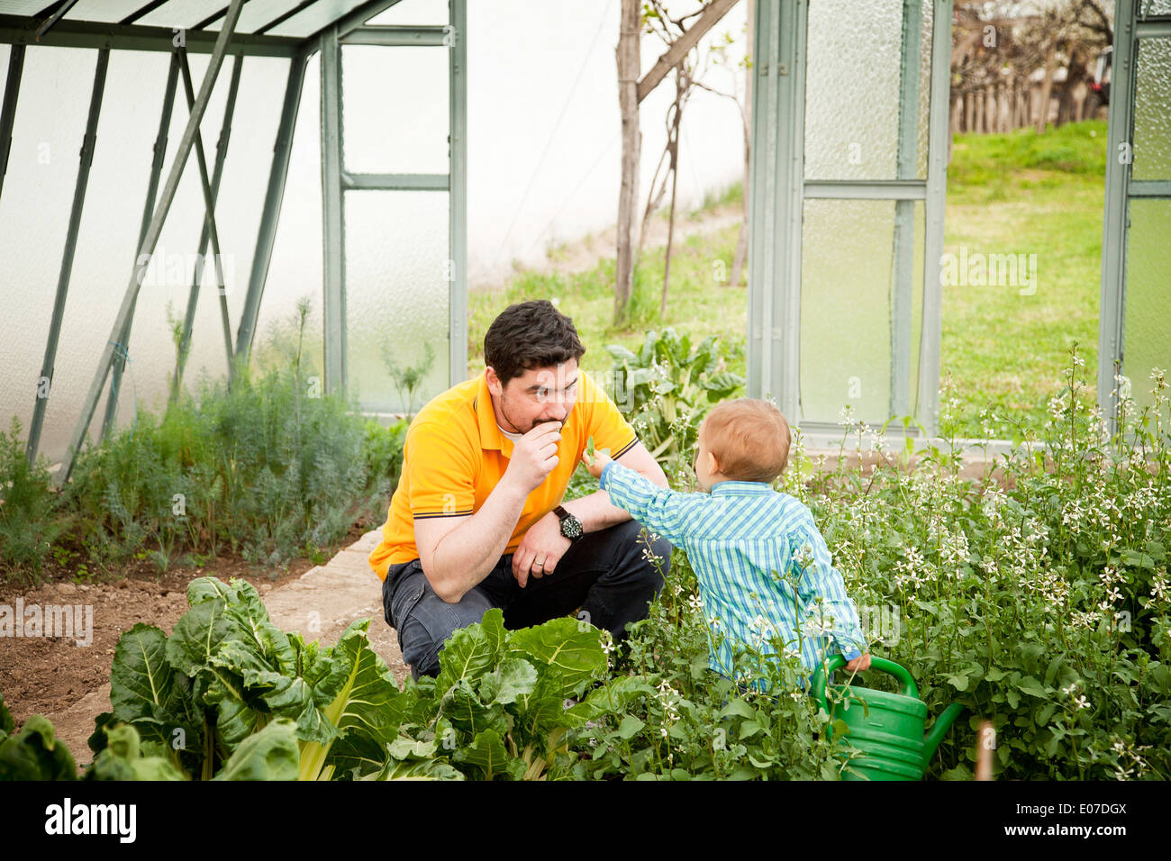 Father and son in vegetable garden, Austria - Stock Image