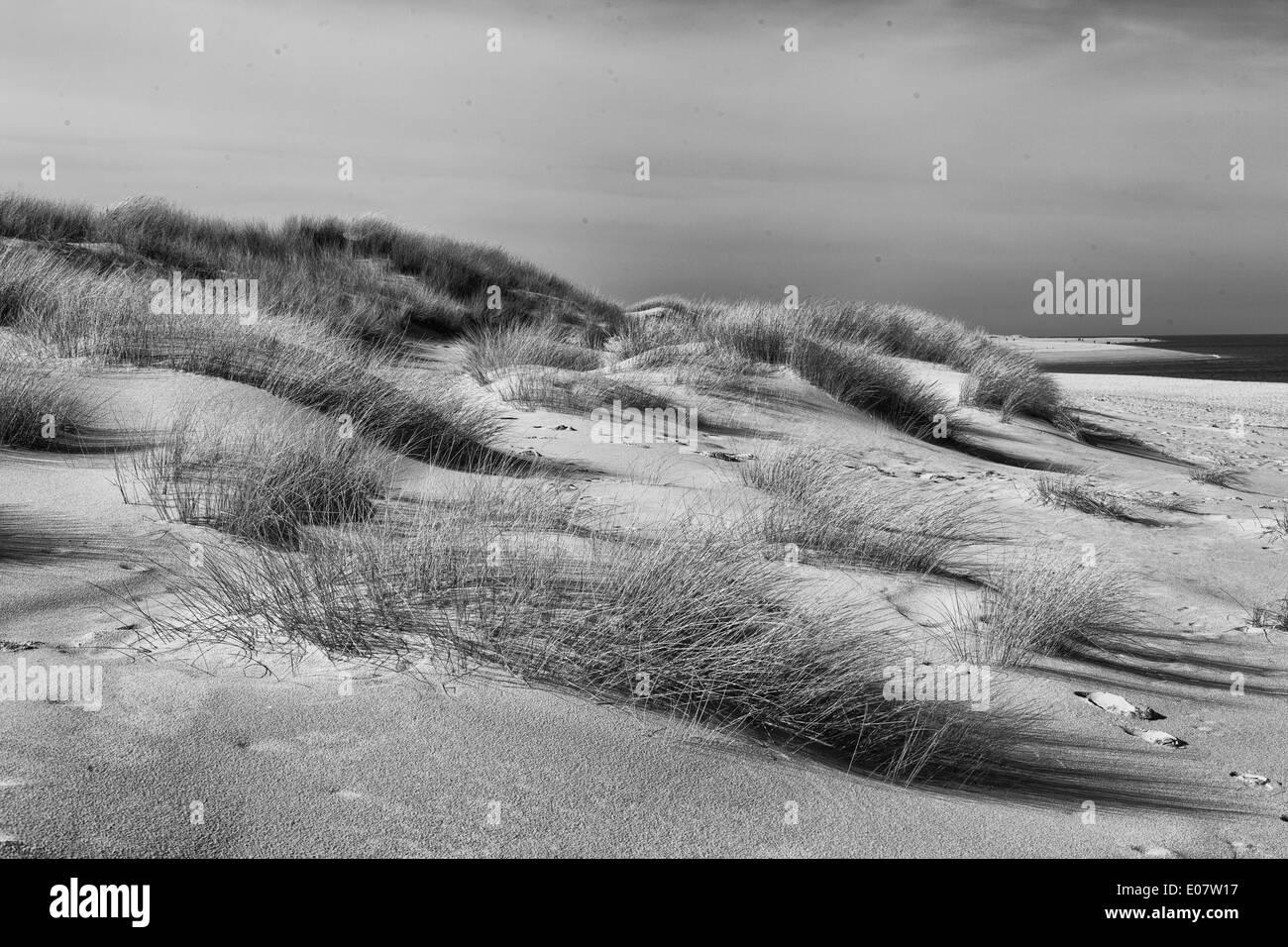 Düne am Weststrand auf der Insel Sylt, Schleswig-Holstein,Deutschland - Stock Image