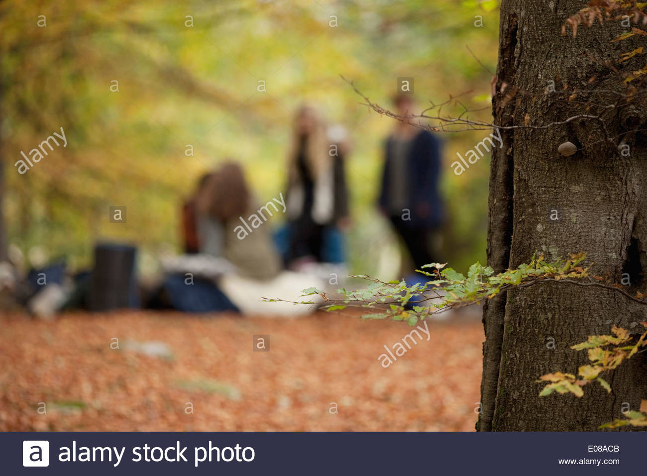 Friends camping in forest - Stock Image
