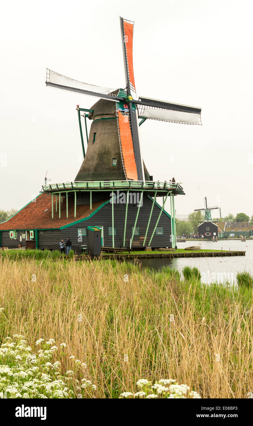 DUTCH WINDMILL AND ORANGE SAILS WITH REEDS ON THE CANAL AT ZAANSE SCHANS NETHERLANDS - Stock Image