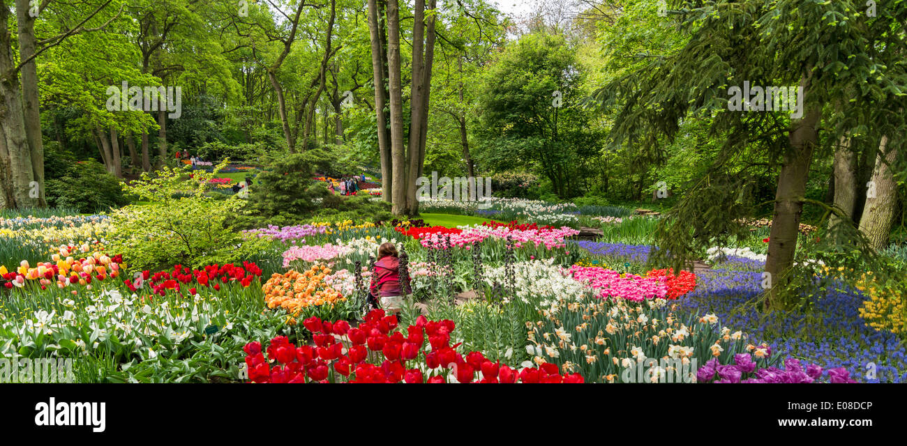 KEUKENHOF GARDENS WITH TULIP BEDS AMONG THE TREES IN SPRINGTIME HOLLAND - Stock Image