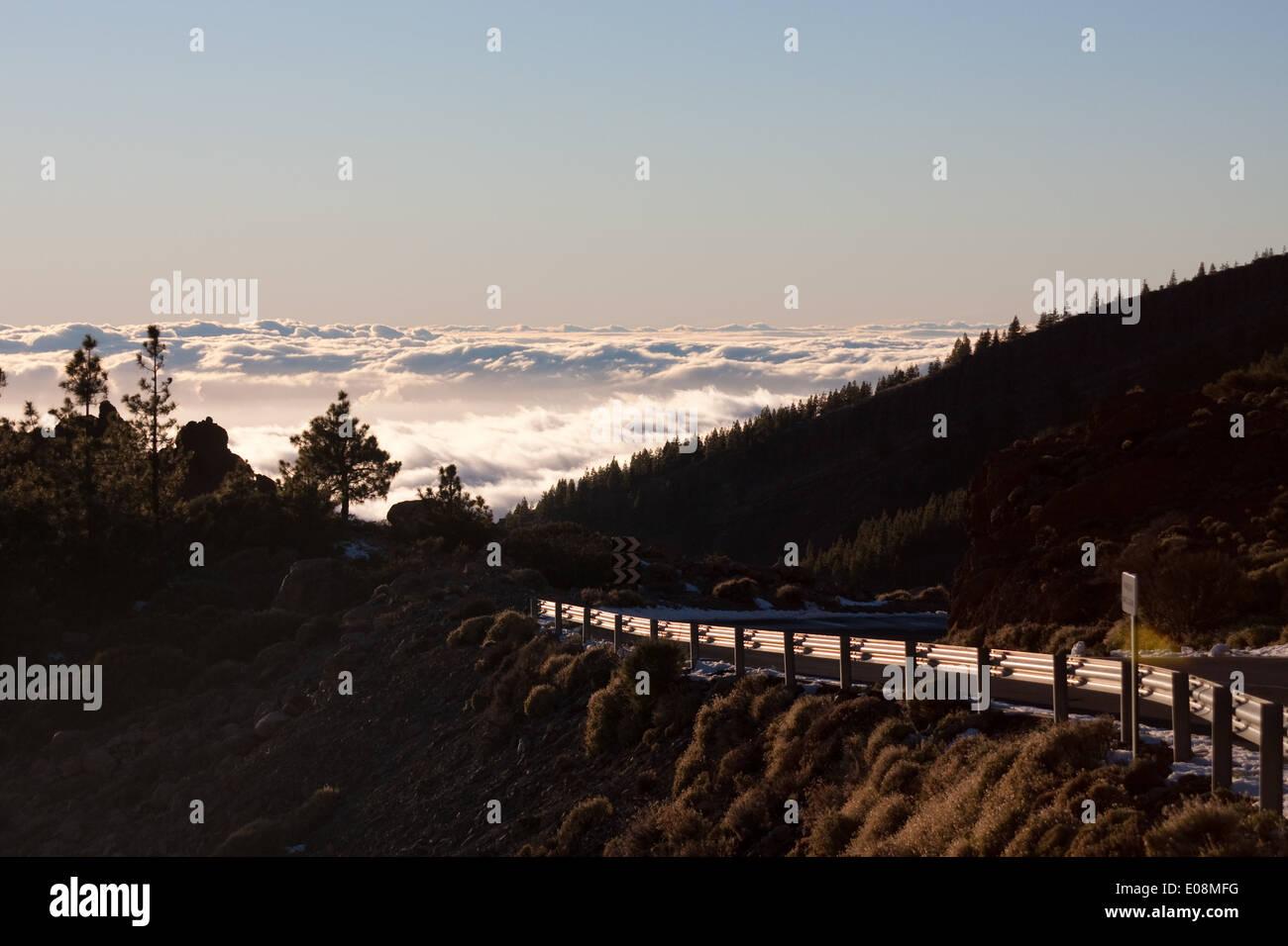 Cloud cover behind trees, Parque Nacional del Teide, Tenerife, Spain - Stock Image