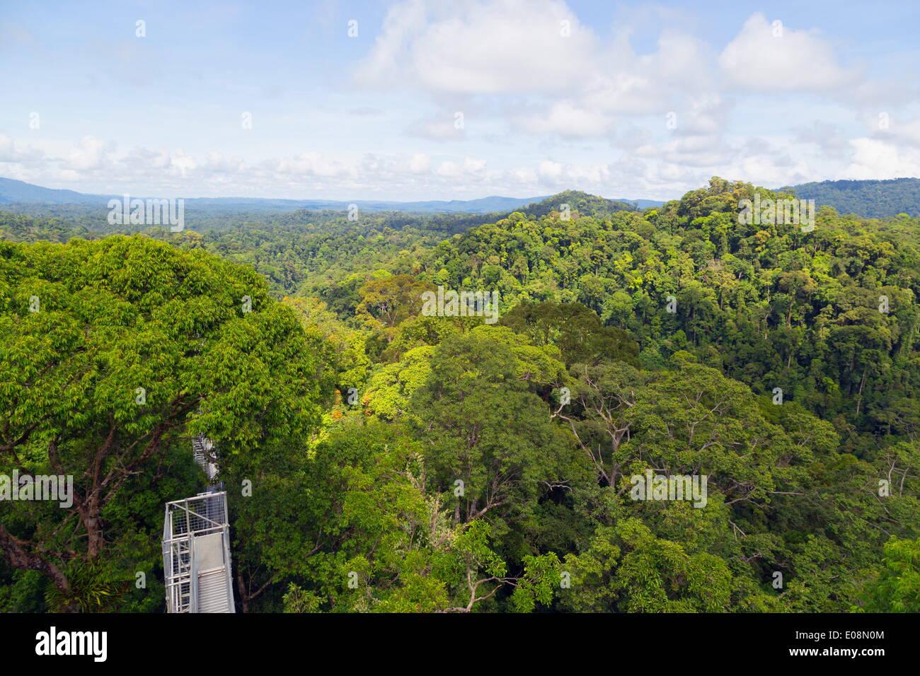 Canopy walk, Ula Temburong National Park, Brunei, Borneo, Southeast Asia, Asia - Stock Image