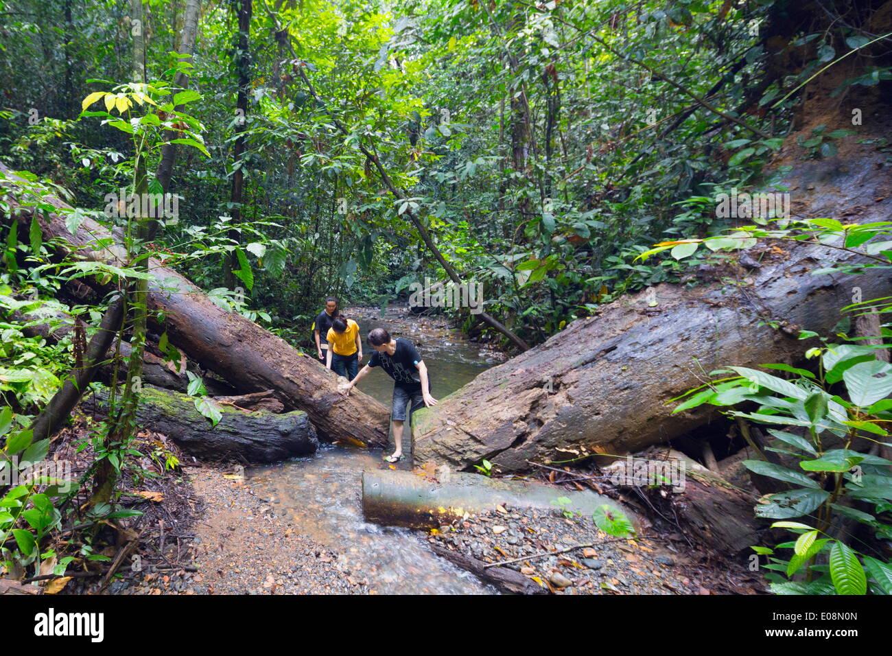 Ula Temburong National Park, Brunei, Borneo, Southeast Asia, Asia - Stock Image