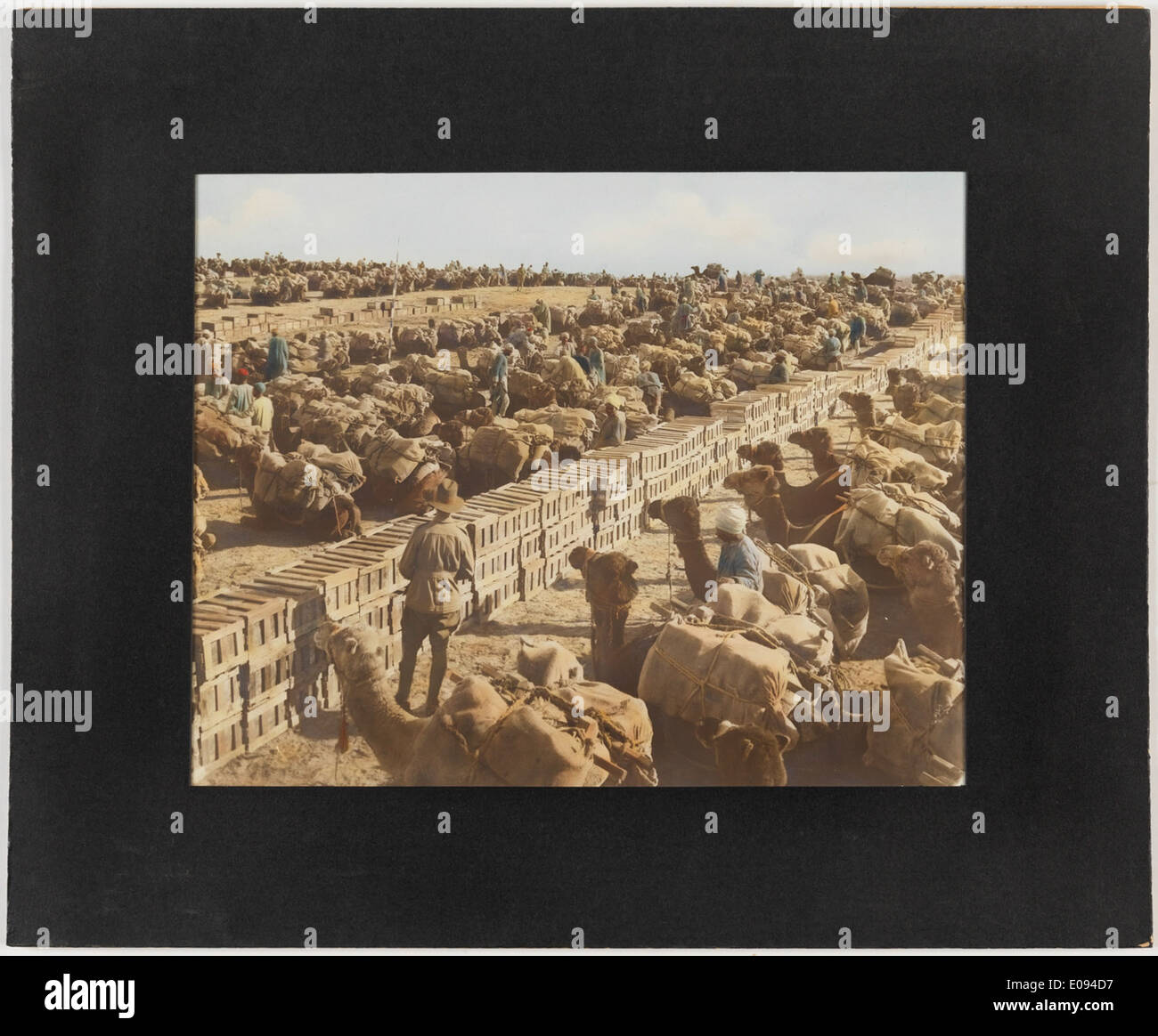 Loading camels at railhead, Palestine by Frank Hurley Stock Photo