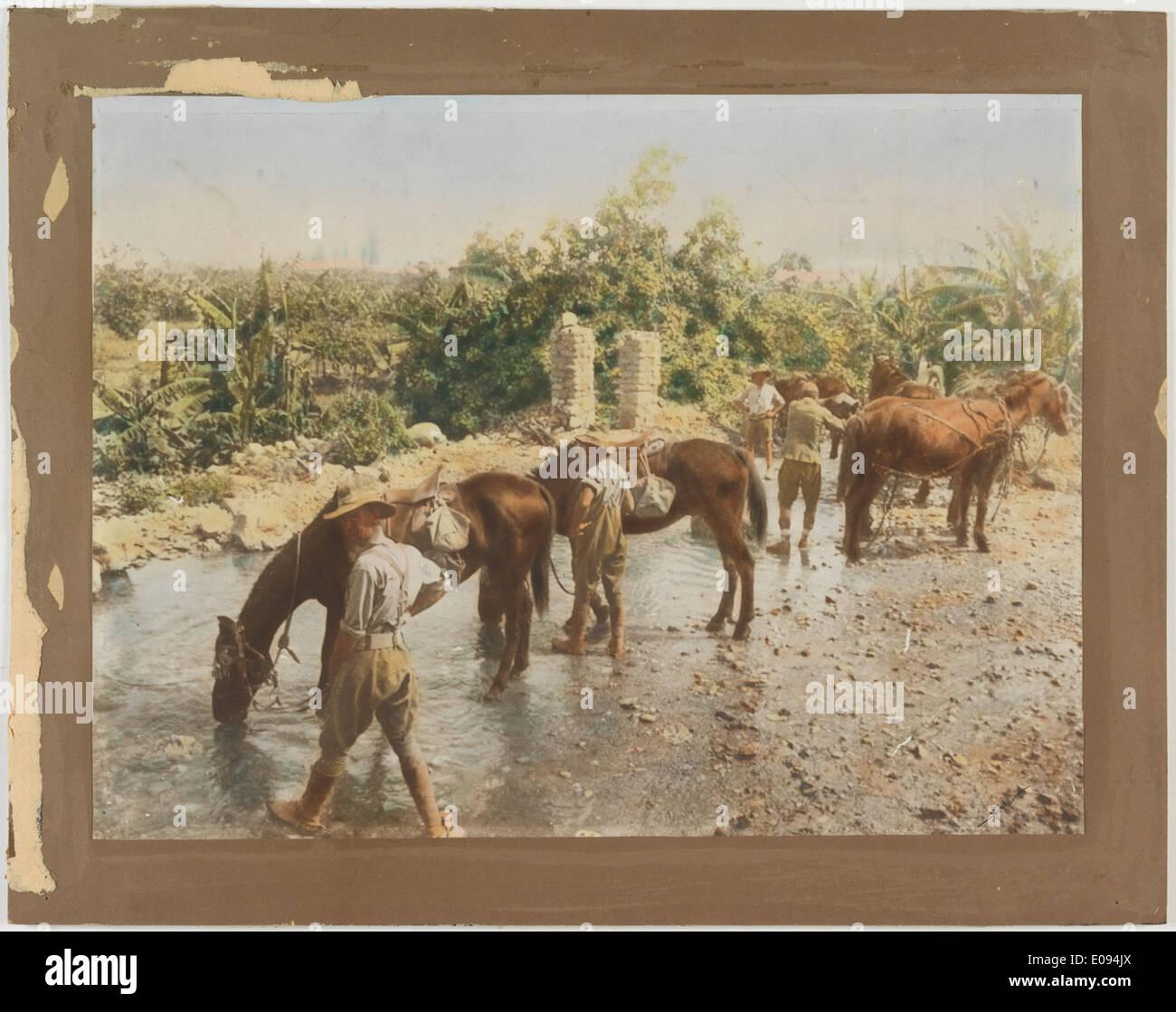 Watering horses at Elisha's Fountain, Jericho Stock Photo