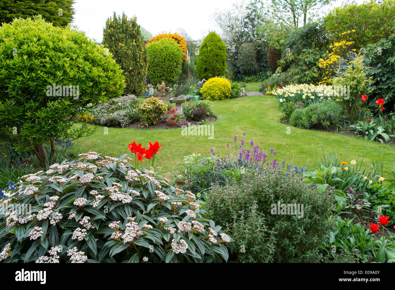 Surbuban garden in late spring with lawn and shrub borders - Stock Image
