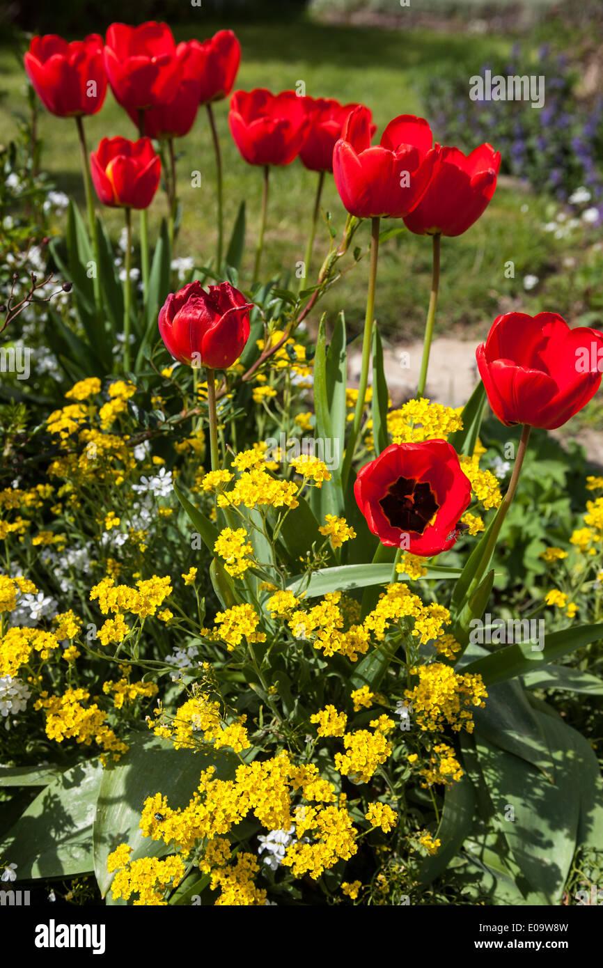 Frühling im Deister Spring in Germany - Weserbergland - Stock Image