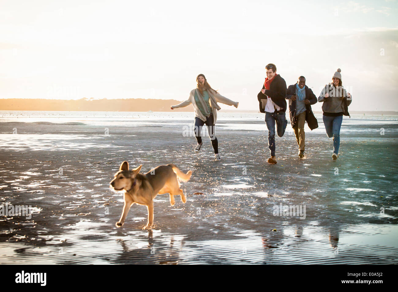 Adult friends racing with pet dog on the beach - Stock Image