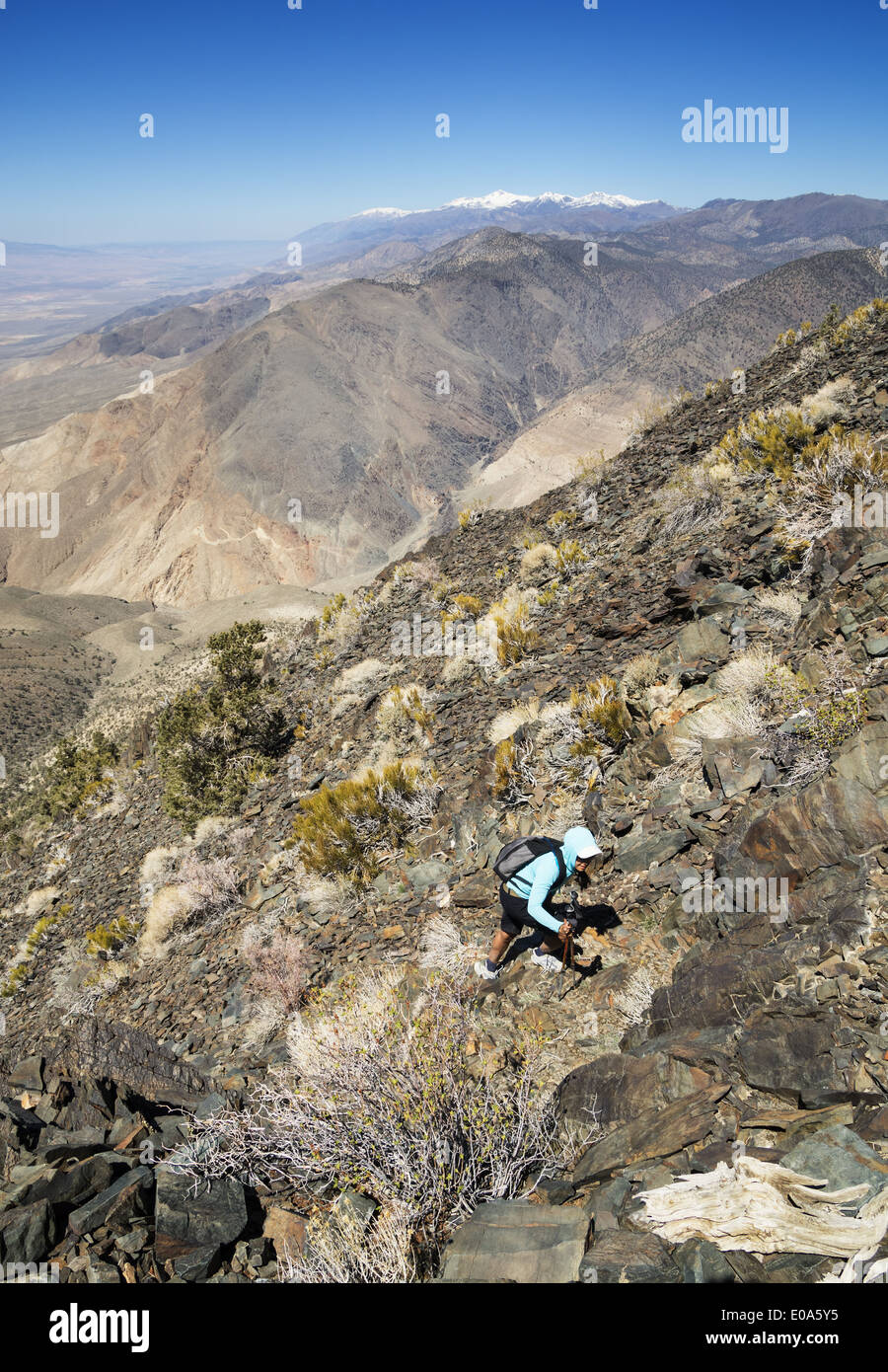 a woman hiking up the desert black mountain in the White Mountains of California - Stock Image