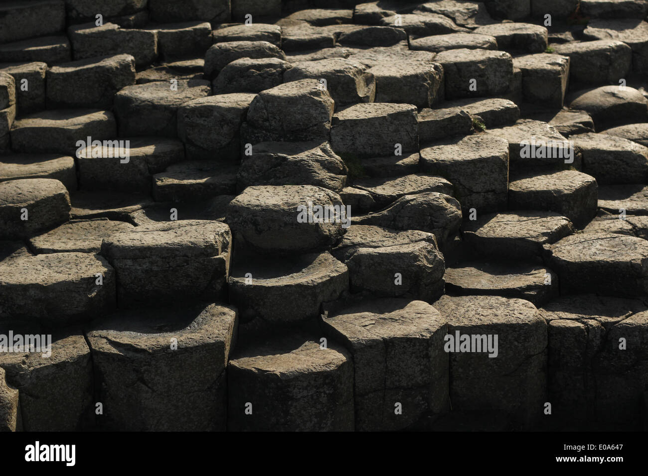 Giant's Causeway - famous visitor site in Northern Ireland (UK) volcanic basalt stones - Stock Image