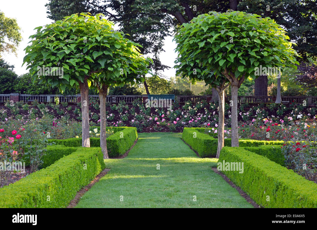 Beautiful green park with colorful rose garden - Stock Image