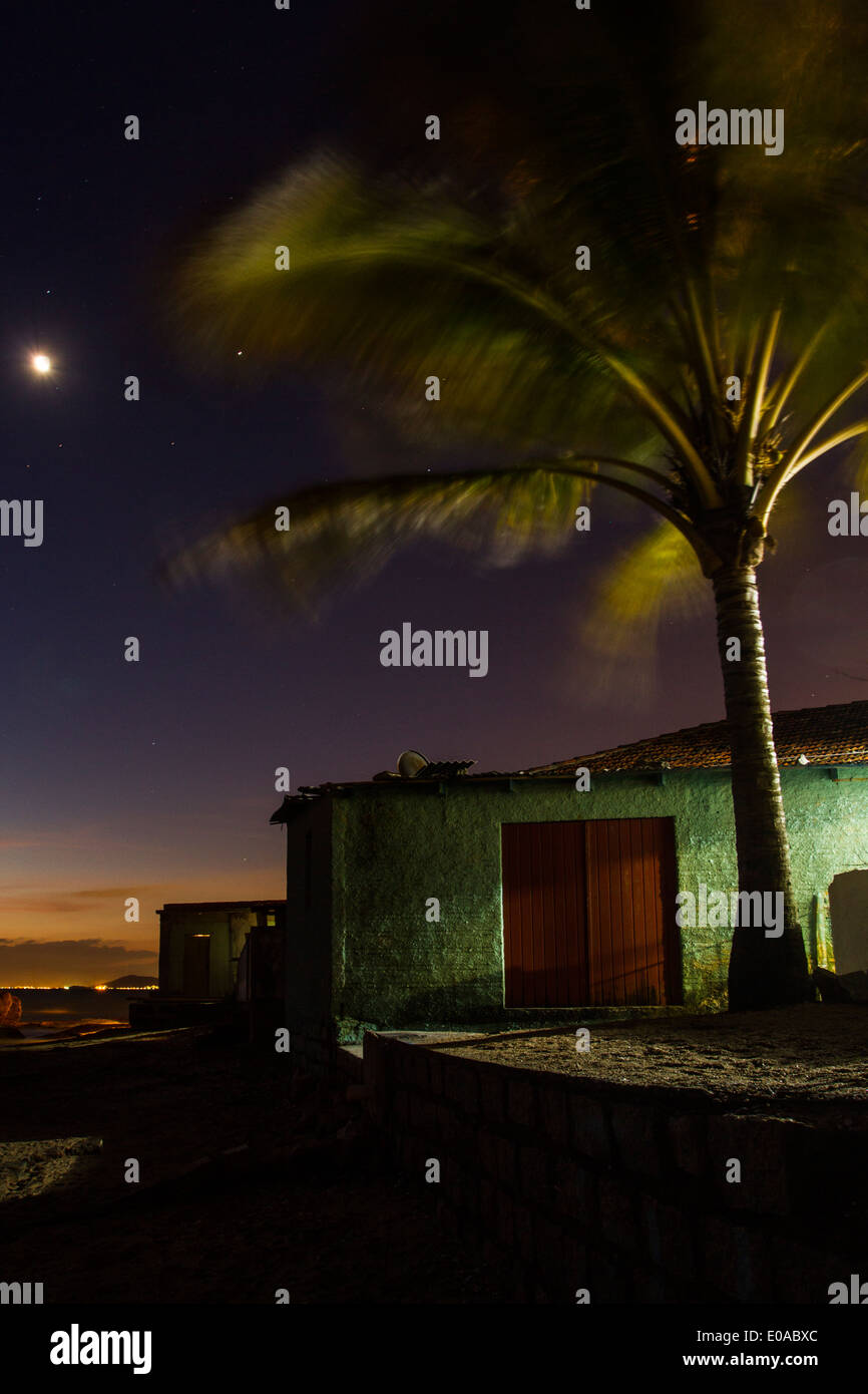 Palm tree in blurred motion at Ribeirao da Ilha Beach at dusk. Florianopolis, Santa Catarina, Brazil. - Stock Image
