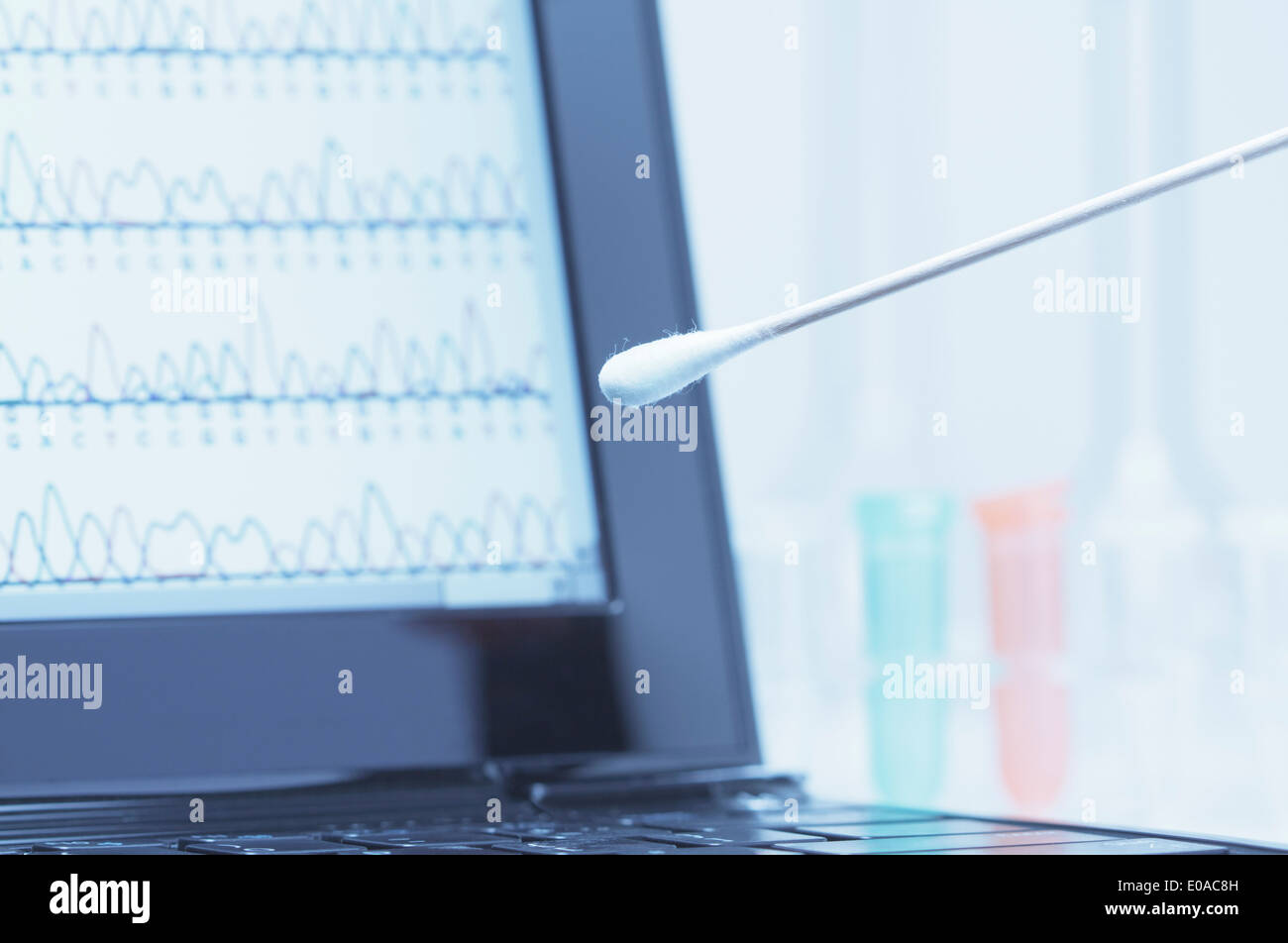 Cotton swab with saliva in front of a laptop screen that displays results of automated DNA sequencing - Stock Image