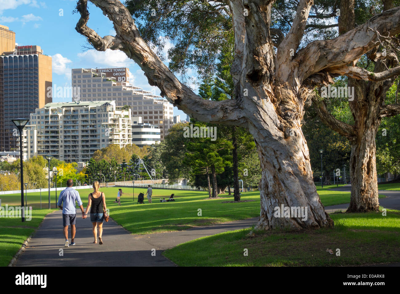 sydney australia nsw new south wales royal botanic gardens. Black Bedroom Furniture Sets. Home Design Ideas