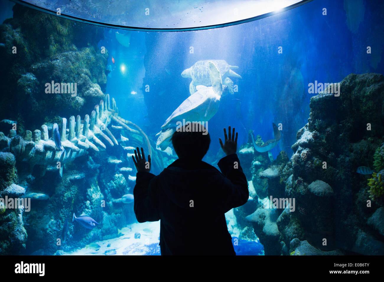 Boy admiring sea life in aquarium - Stock Image