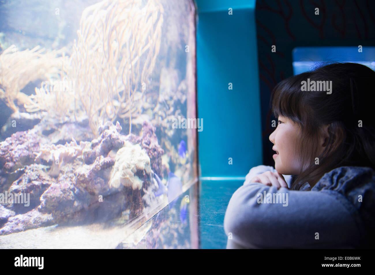 Girl admiring sea life in aquarium - Stock Image