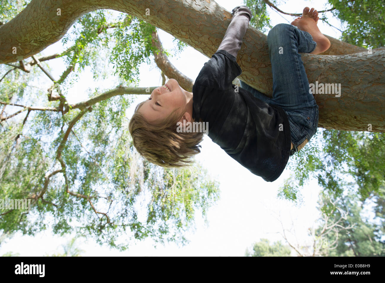 Upside down boy wrapped around tree branch - Stock Image