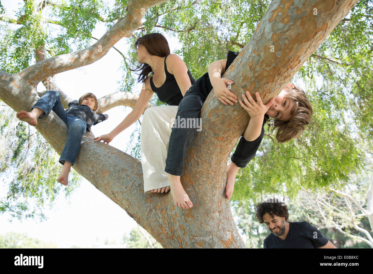 Family with two boys climbing on park tree Stock Photo