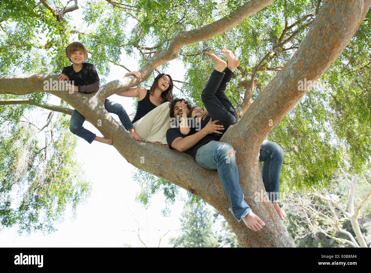 Portrait of family with two boys climbing on park tree - Stock Image
