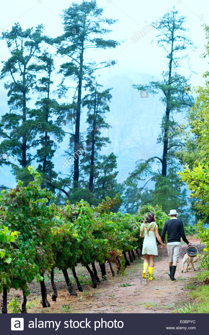 couple in late twenties walking hand in hand in the vineyard - Stock Image