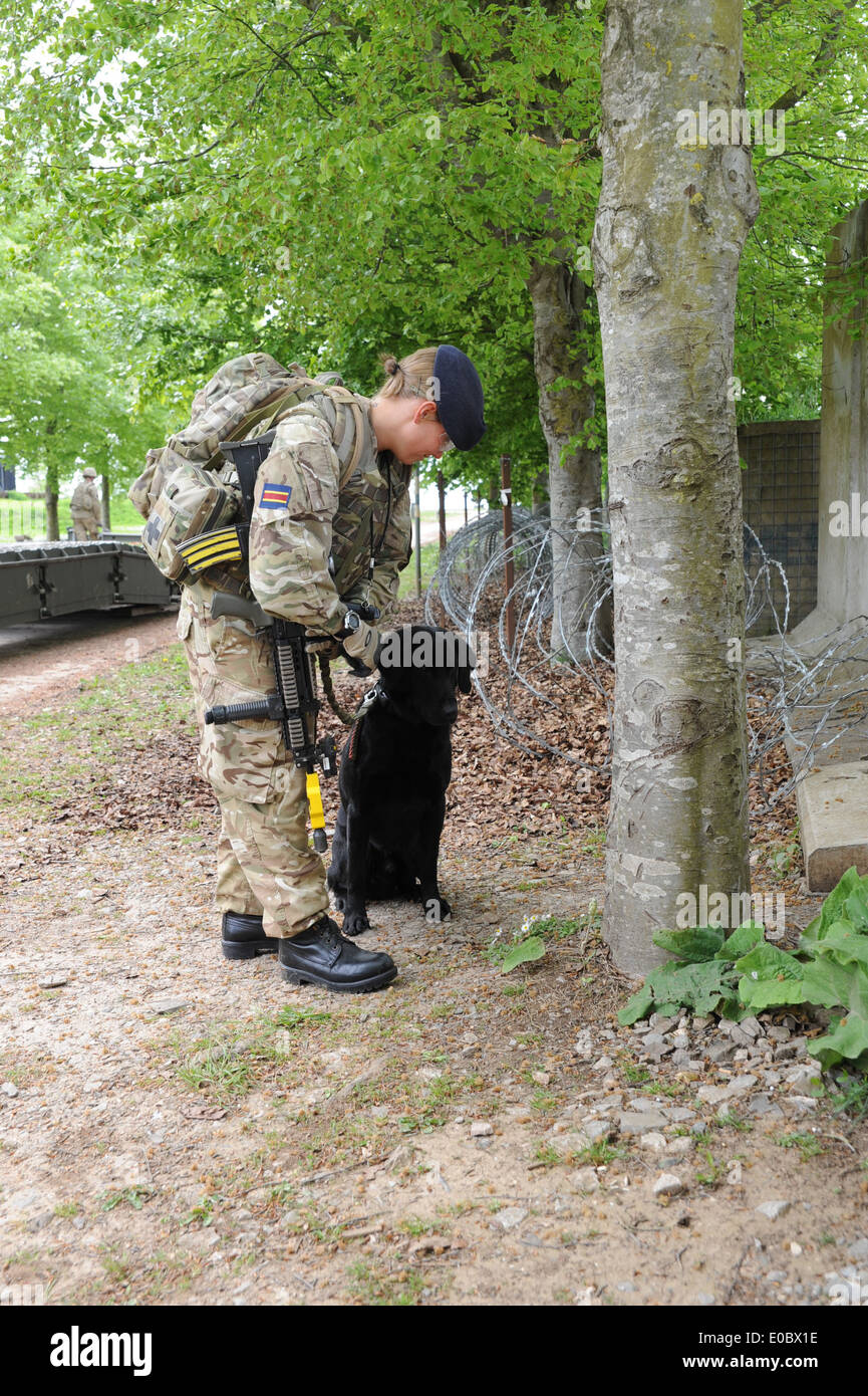 female solder and here search dog training before they go to