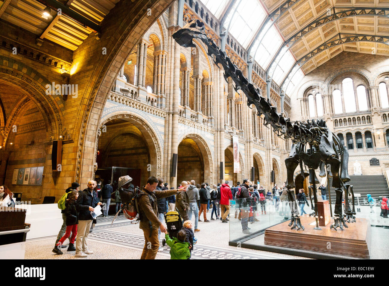 The statue of the diplodocus known as 'Dippy'  in the entrance hall, Natural History Museum London, England UK - Stock Image