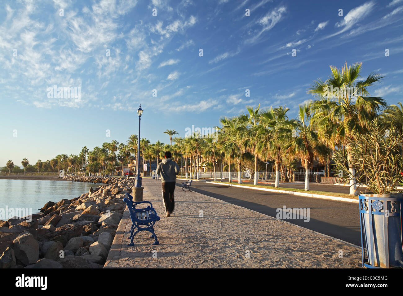 Jogger on palm-lined Malecon (waterfront promenade ...